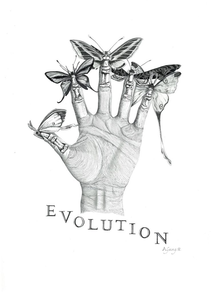EVOLUTION - For The Evolution Store